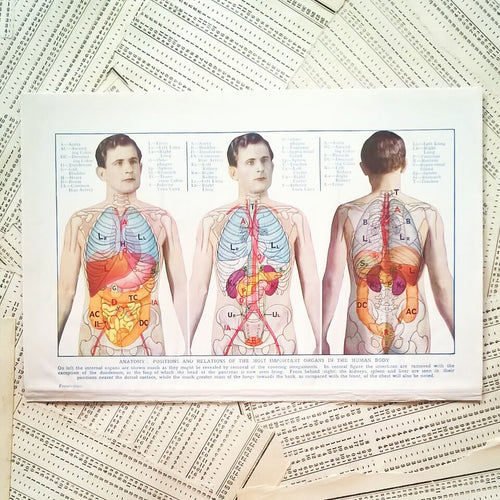 Vintage Medical Page - Anatomy