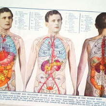 Load image into Gallery viewer, Vintage Medical Page - Anatomy