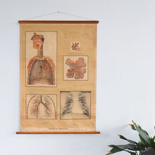 Load image into Gallery viewer, German in English Organs of Respiration Anatomical Chart