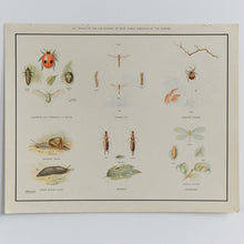 Load image into Gallery viewer, Vintage Harvey School Educational Poster - Insects (Lady Bird)