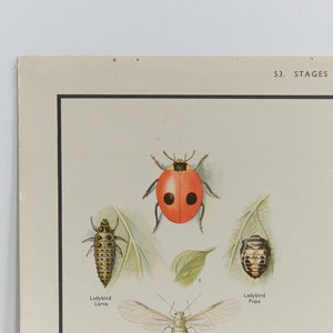 Vintage Harvey School Educational Poster - Insects (Lady Bird)