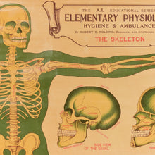 Load image into Gallery viewer, Vintage Small E.J. Arnold & Son Anatomical Poster of The Skeleton No. 1