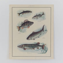 Load image into Gallery viewer, Vintage Harvey School Educational Poster / Print of Fish