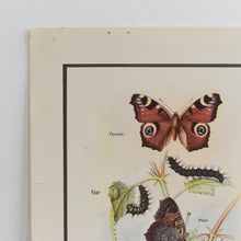 Load image into Gallery viewer, Vintage Harvey School Educational Poster / Print of Butterflies