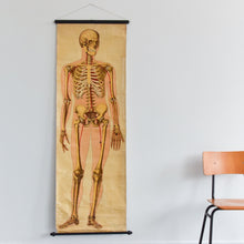 Load image into Gallery viewer, Vintage Large Human Skeleton Anatomical Poster Chart by Ruddiman Johnston & Co. LTD of London
