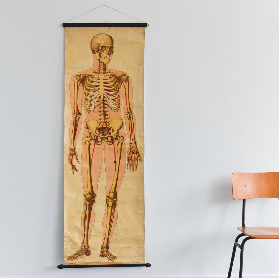 Vintage Large Human Skeleton Anatomical Poster Chart by Ruddiman Johnston & Co. LTD of London