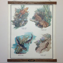 Load image into Gallery viewer, Vintage Educational Wall Chart - No 19 - Amphibious Animals