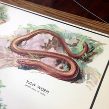 Load image into Gallery viewer, Vintage Educational Wall Chart - No 22 - Lizards & Snakes