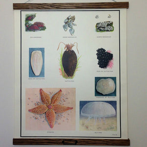Vintage Educational Wall Chart - No 57 - Miscellaneous Sea Creatures