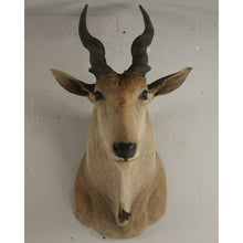 Load image into Gallery viewer, Giant Vintage Mounted Eland