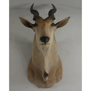 Giant Vintage Mounted Eland