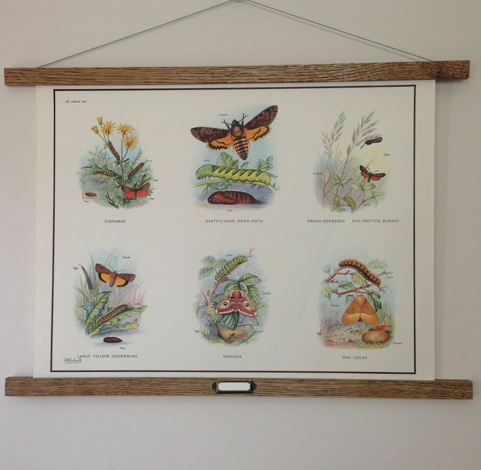 Vintage Educational Wall Chart - No 47 - Stages in the Life History of Moths A