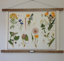 Load image into Gallery viewer, Vintage Educational Wall Chart - No 33 - Daisy Family III