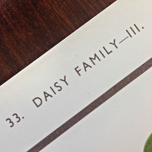 Vintage Educational Wall Chart - No 33 - Daisy Family III