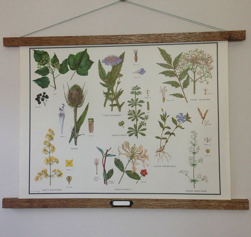 Vintage Educational Wall Chart - No 36 - Misc Families III