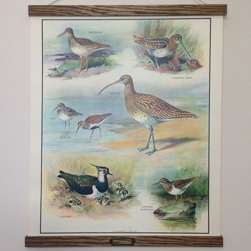 Vintage educational wall chart - No 10 - Birds of the Marsh and Heath