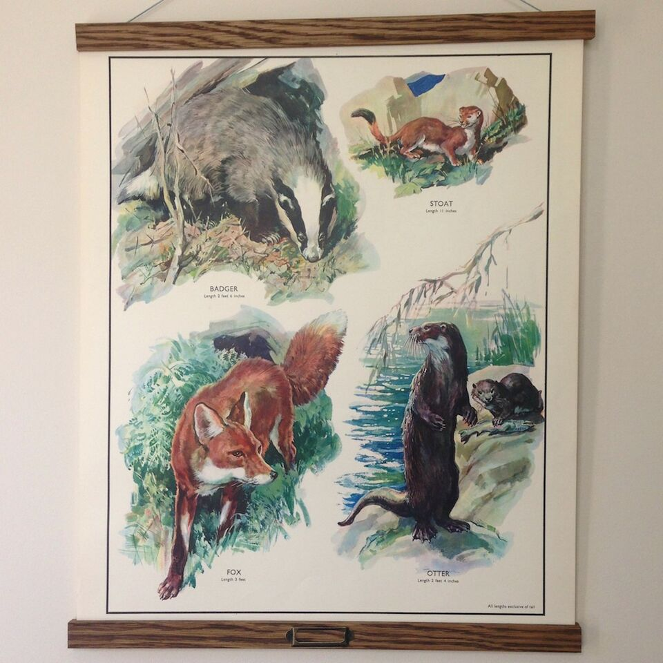 Vintage Educational Wall Chart - No 20 - Flesh-Eating Animals
