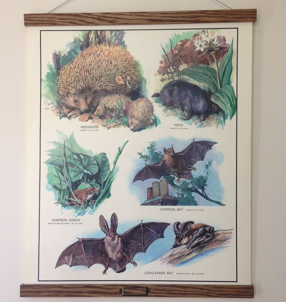 Vintage Educational Wall Chart - No 21 - Insect-Eating Animals