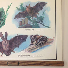 Load image into Gallery viewer, Vintage Educational Wall Chart - No 21 - Insect-Eating Animals
