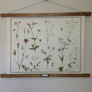 Vintage educational wall chart - No 24 - Pink and Cranesbill Families