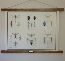 Load image into Gallery viewer, Vintage Educational Wall Chart - No 54 - Pond Insects