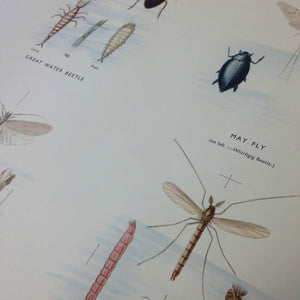 Vintage Educational Wall Chart - No 54 - Pond Insects