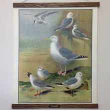 Load image into Gallery viewer, Vintage educational wall chart - No 13 - Seaside Birds
