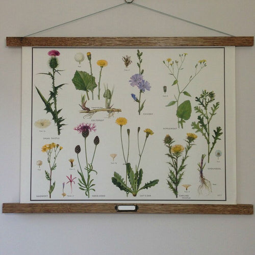 Vintage Educational Wall Chart - No 32 - Daisy Family II