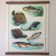 Load image into Gallery viewer, Vintage Educational Wall Chart - No 60 - Sea Fish II