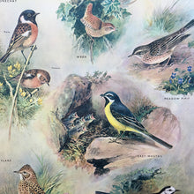 Load image into Gallery viewer, 1950s School Chart - 16 - Insect-Eating Birds III