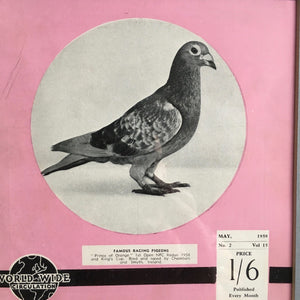 Vintage racing pigeon print - 'Prince of Orange'