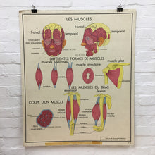 Load image into Gallery viewer, French Rossignol Vintage Anatomical Poster