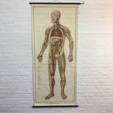 Load image into Gallery viewer, Vintage Anatomical Chart by Dr te Neues