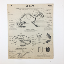 Load image into Gallery viewer, French Vintage Anatomical Chart – Horse