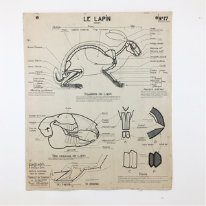 French Vintage Anatomical Chart – Horse