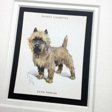 Load image into Gallery viewer, Framed Dog Breed Vintage Cigarette Card - Cairn Terrier - Full