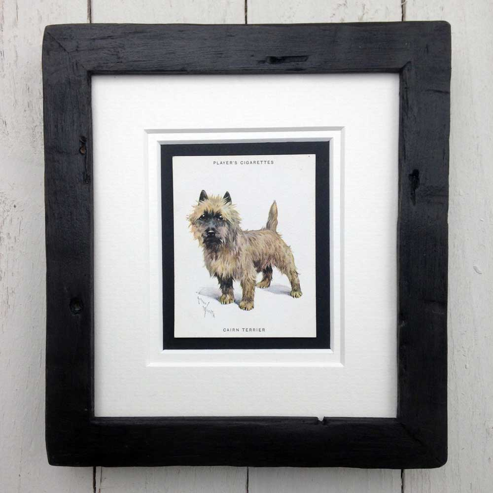 Framed Dog Breed Vintage Cigarette Card - Cairn Terrier - Full