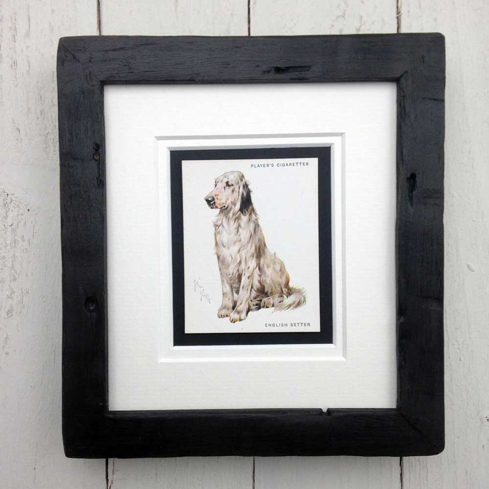 Framed Dog Breed Vintage Cigarette Card - English Setter - Full