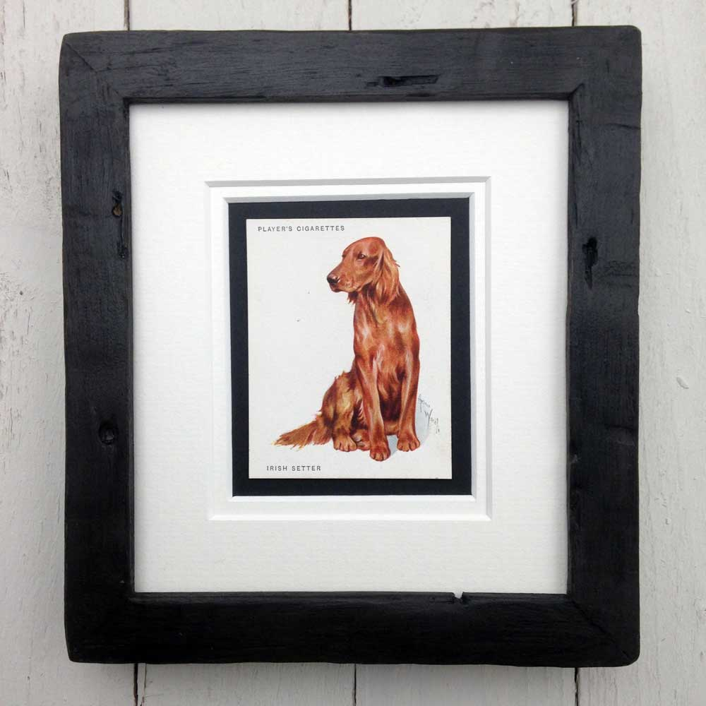 Framed Dog Breed Vintage Cigarette Card - Irish Setter - Full