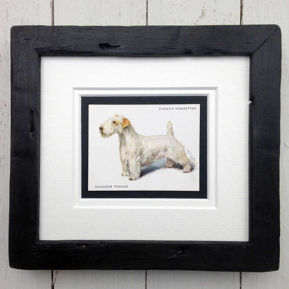 Framed Dog Breed Vintage Cigarette Card - Sealyham Terrier - Full