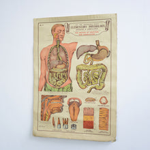 Load image into Gallery viewer, Anatomical Chart By Robert E Holding Circa 1920s