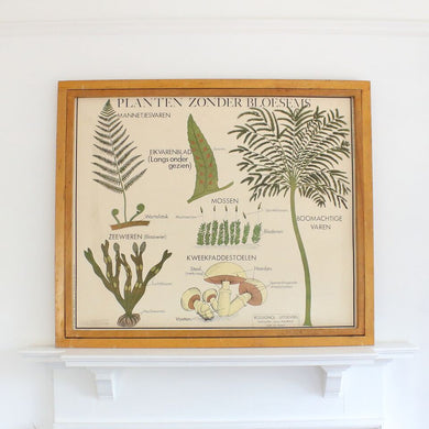 Vintage Flemish/Dutch Double Sided School Poster - Plants Without Blossom