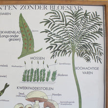 Load image into Gallery viewer, Vintage Flemish/Dutch Double Sided School Poster - Plants Without Blossom