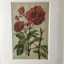 Load image into Gallery viewer, Pair of Vintage Framed Botanical Prints