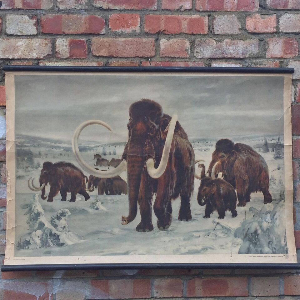 1950s Czech School Chart of a Mammoth