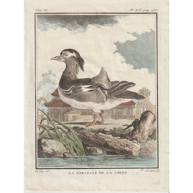 Buffon Histoire Naturelle Bird Engravings 1766 - La Sarcelle de la Chine