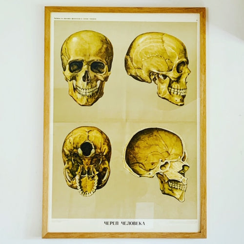 Soviet Textile Education Poster of a Human Skull