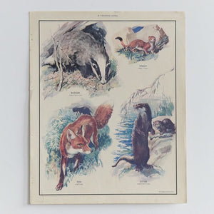 Vintage Harvey School Educational Poster / Print - Flesh-Eating Animals