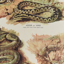 Load image into Gallery viewer, Vintage Harvey School Educational Poster / Print - Lizards & Snakes