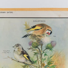 Load image into Gallery viewer, Vintage Harvey School Educational Poster / Print - Seed & Grain Eaters